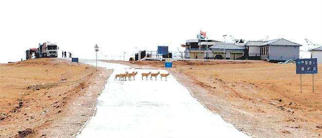 身后和远方——目击藏羚羊大迁徙2.jpg