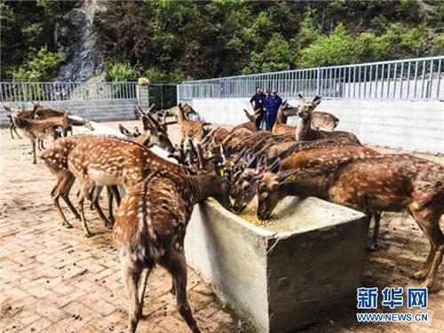 四川省稻城县:培育特色产业让农牧民插上脱贫奔小康的翅膀2.jpg