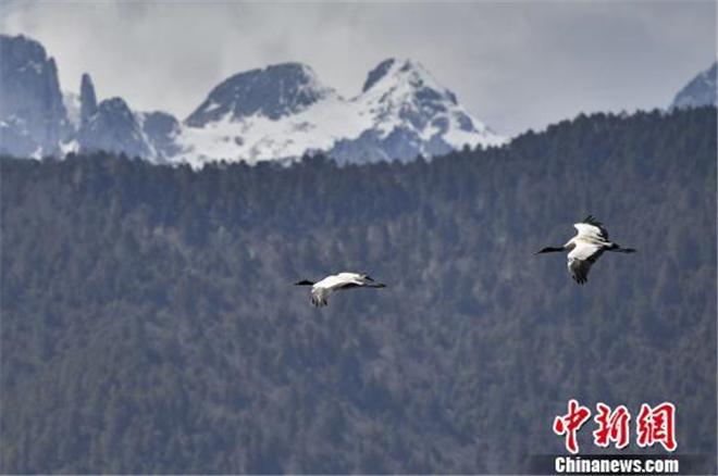 纳帕海:香格里拉的候鸟天堂2.jpg