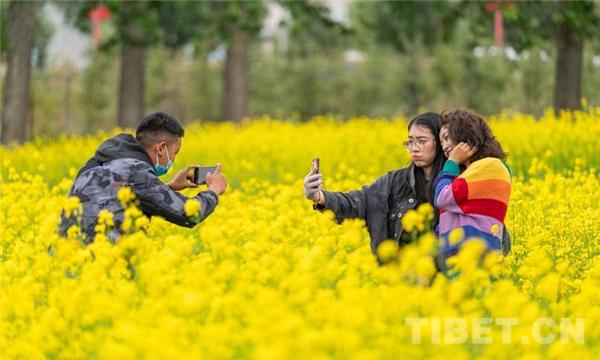 乡村振兴花为媒 第四届西藏·墨竹小油菜花文化旅游节开幕3.jpg