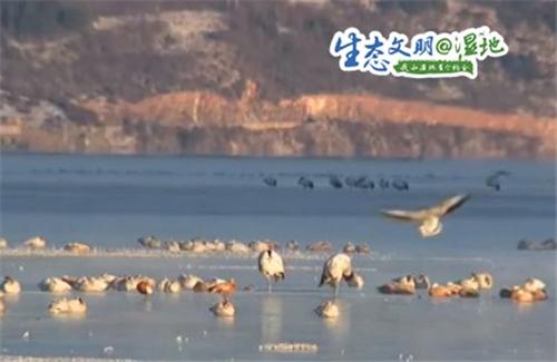 云南香格里拉纳帕海自然保护区冬季观鸟正当时2.jpg