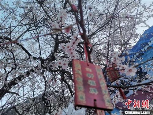 西藏林芝第十七届桃花旅游文化节4月2日开幕