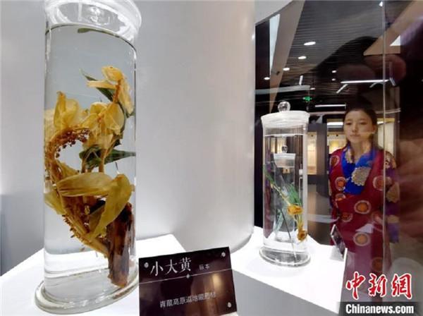青海大学民族医学博物馆揭牌 展示三十五种中国民族医药1.jpg