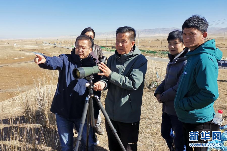 青海湖国家级自然保护区越冬水鸟达16.2万余只