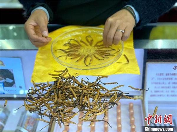 2020青海冬虫夏草出口逆势增长 出口值居中国首位
