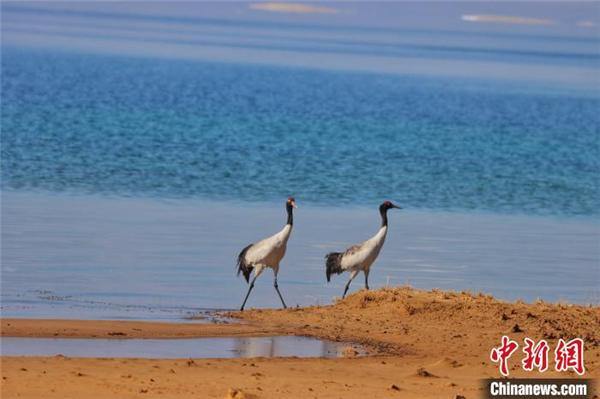 """""""大美净好""""中国最大内陆咸水湖生态保护成效凸显"""
