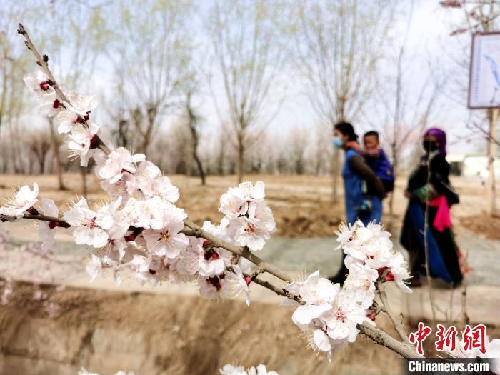 青海:高原春来晚,黄河岸畔率先开启赏花季