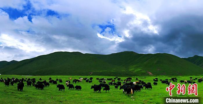 青海甘德县成功创建国家级农村产业融合发展示范园