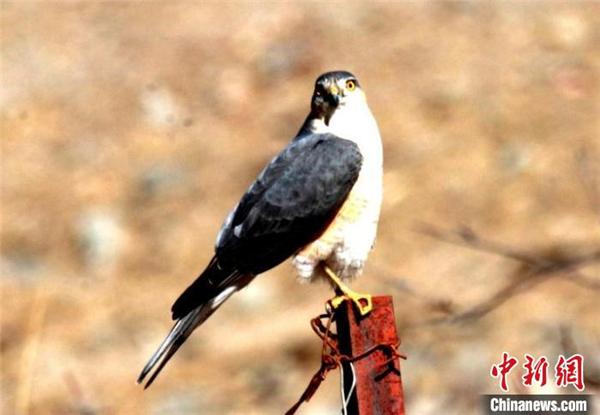 青海玛可河国家湿地公园鸟类监测新增10种