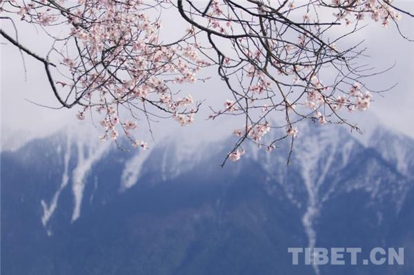 西藏林芝:以特色优势产业 迎来旅游高质量发展