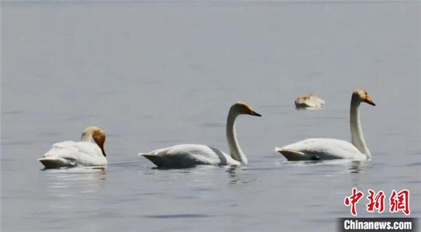可鲁克湖-托素湖自然保护区鸟类名录增至124种