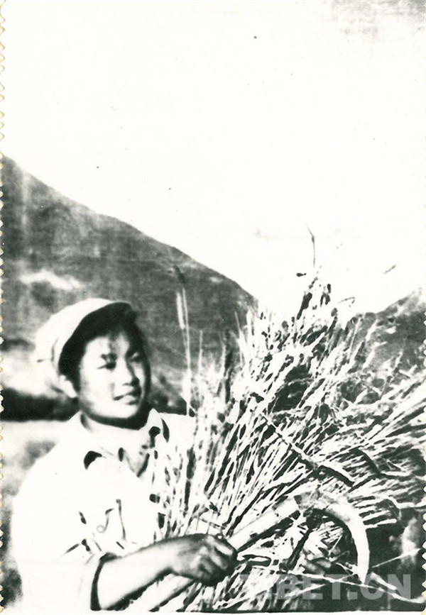 《毛主席的光辉》:难忘的歌声、波密的记忆2.jpg