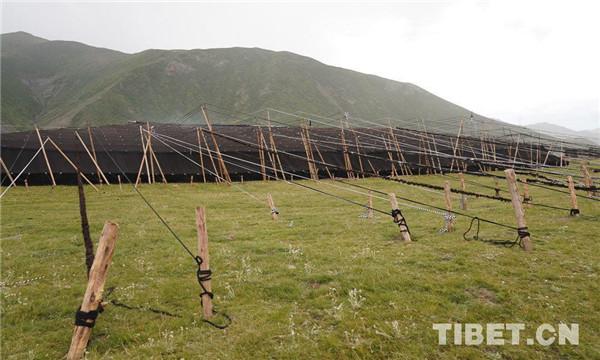 西藏自治区国家级非遗代表性项目增至106项