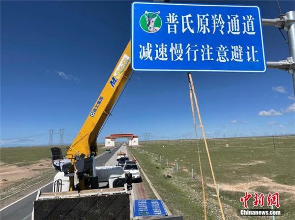 中国首个普氏原羚保护通道在青海正式建成