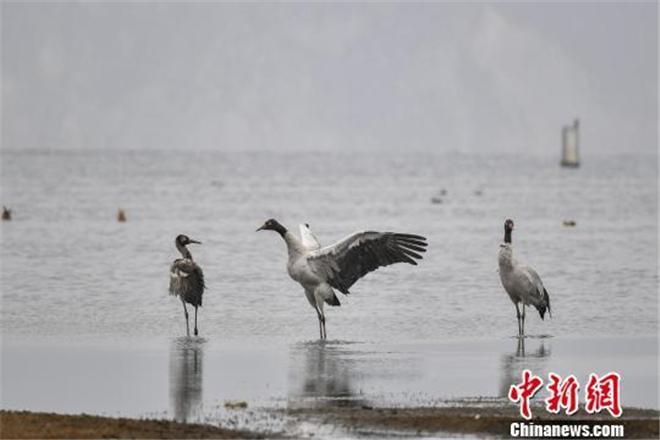 纳帕海:香格里拉的候鸟天堂