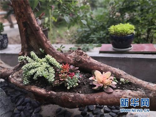 甘肃省迭部县:高吉村的诗和远方4.jpg