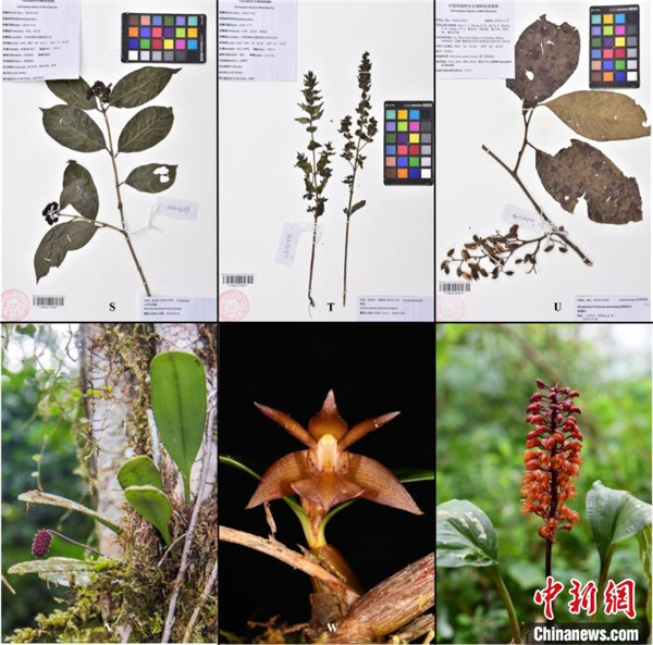 科研人员在西藏发现4个中国新记录种1.jpg
