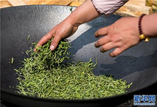 新产业 新气象 西藏察隅县首批春茶开采3.jpg