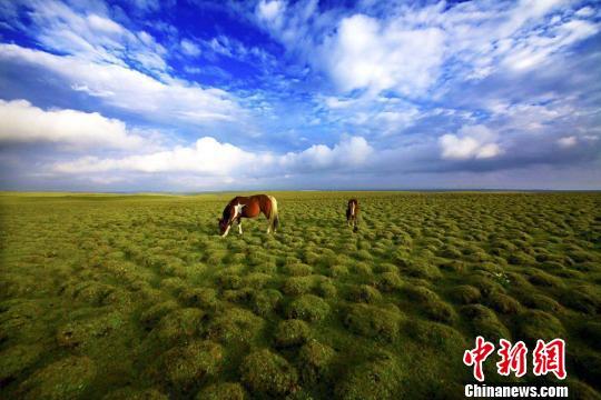 """黄河上游重要水源涵养地""""治沙护草""""初见成效"""