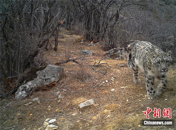 """西藏怒江河谷现野生动物""""高速公路"""".jpg"""