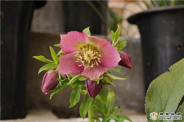 迪庆影像生物多样性摄影展和香格里拉第六届春季花展开幕3.jpg