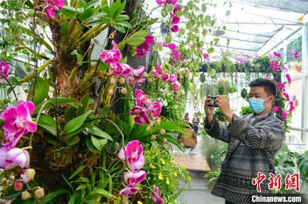 西藏首届花卉艺术旅游文化开幕 数万鲜花绽放雪域高原2.jpg