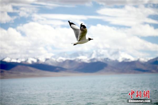 西藏纳木错迎来旅游旺季3.jpg