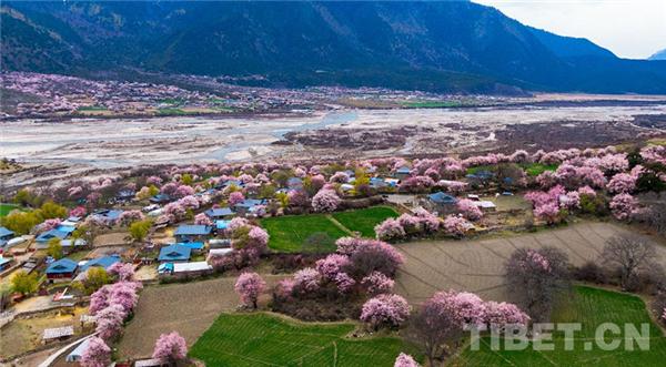 """以特色优势产业 迎来生态旅游高质量发展的""""春天""""1.jpg"""