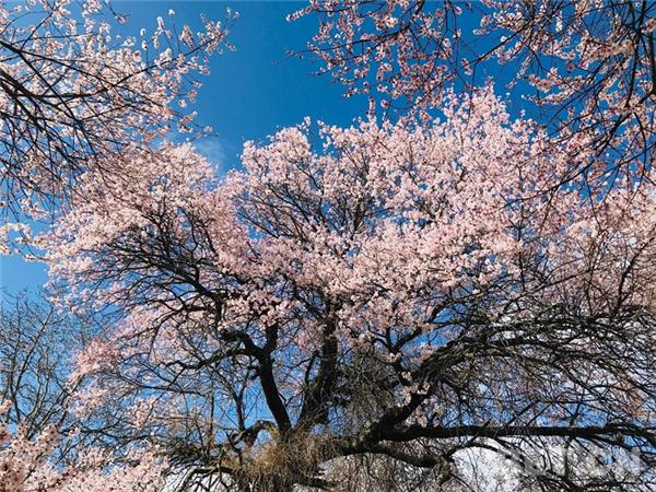 """以特色优势产业 迎来生态旅游高质量发展的""""春天""""3.jpg"""