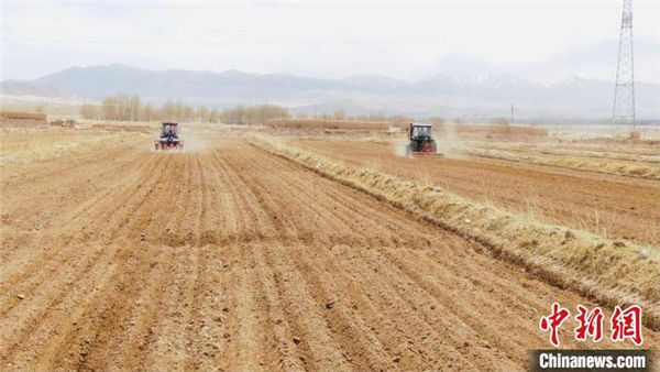 上万亩藜麦在柴达木盆地开始播种2.jpg