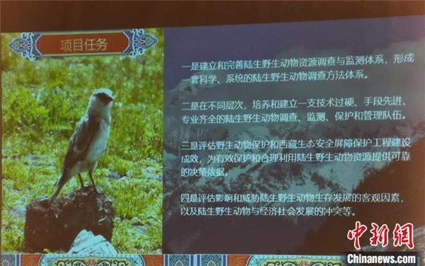 西藏陆生野生脊椎动物种数记录增至1072种3.jpg