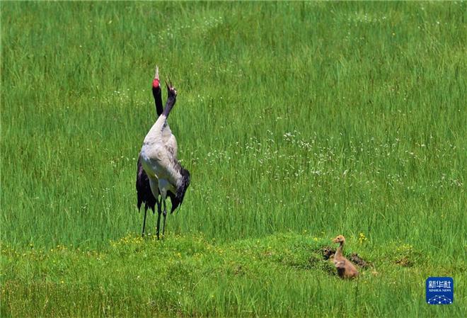 万类霜天竞自由——四川省阿坝州珍稀动物增至142种2.jpg