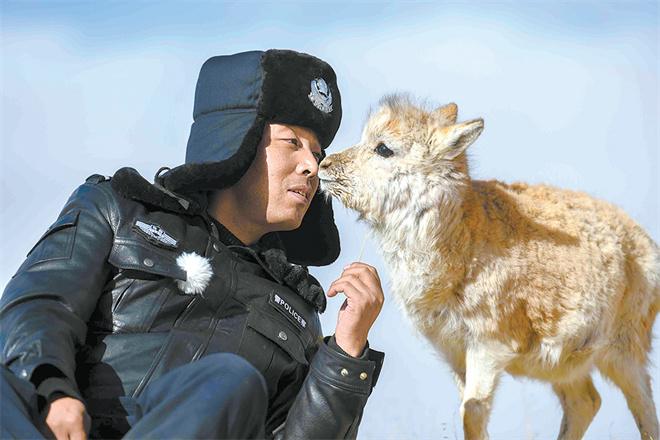身后和远方——目击藏羚羊大迁徙4.jpg
