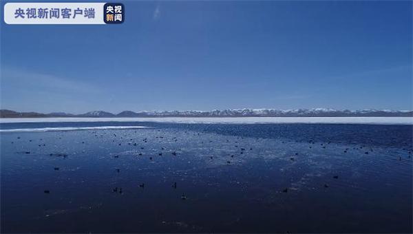 黑颈鹤来做客 甘肃尕海湖迎来候鸟迁徙期1.jpg