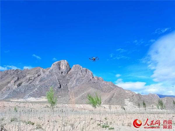西藏首次使用无人机精准飞播造林种草2.jpg