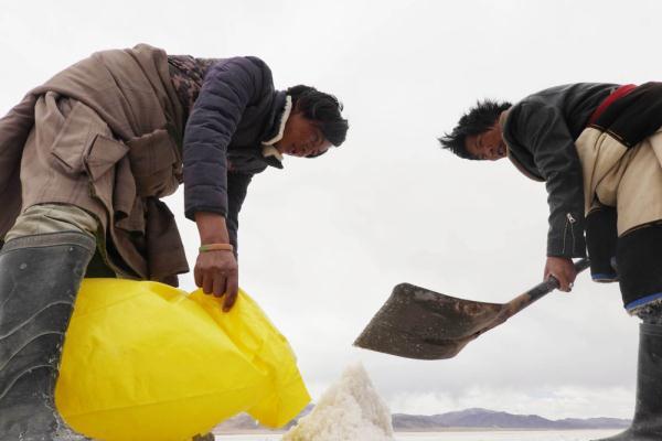 西藏革吉:高原盐湖采盐忙3.jpg