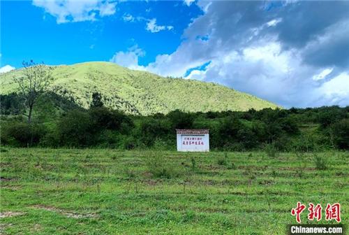 青海班玛:青藏高原唯一藏雪茶种植区 户户享收益4.jpg