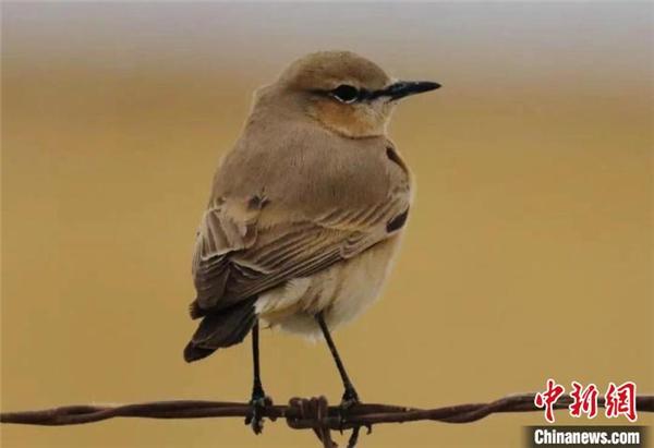 可鲁克湖-托素湖自然保护区鸟类名录增至124种1.jpg