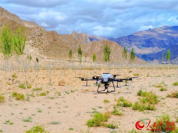 西藏首次使用无人机精准飞播造林种草1.jpg